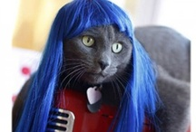 Hair cat