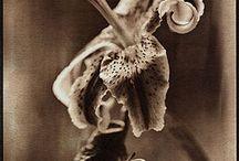 Alt Photo - Van Dyke Brown