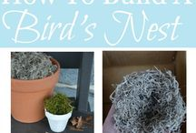 Birds and their Nests / Nesting birds and how to help you can help them get started on building their homes.