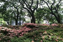 Historic Squares in Savannah Georgia / by Marie Skocelas Martineau
