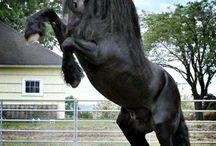 Paarden /Horses ❤