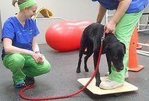 Rehabilitation / Canine and Feline Rehabilitation
