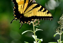 Butterfly zone™