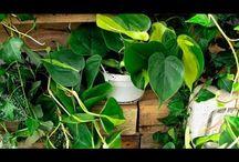 Plantas Buenas Y Malas