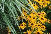 Plant Combinations / by Scott Hokunson
