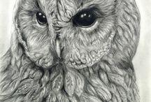 birds: art