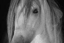 horses / by Glendora Seefeld