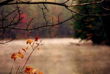 On Holiday: Autumn Love