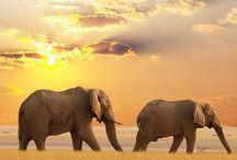 Animals Echo Shea Adores / Animal's that I love seeing. #EchoShea