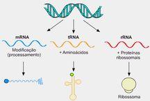 prova de biologia molecular
