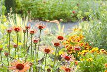 Ideas and plants Sunny Gardens