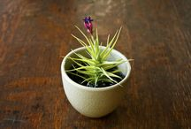 Air Plant Design / by Air Plant Design Studio