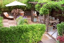 Backyard, deck, and plants / by Michelle Parker