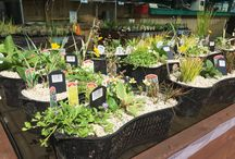 Our pond fish & plants / Some of the pond fish and plants we have here at Portonaquapet
