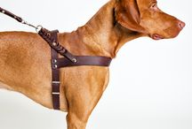 Dog leather coller