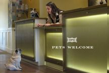 We Love Pets / by Hotel Parq Central