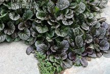 Ground covers / by Steve Doe