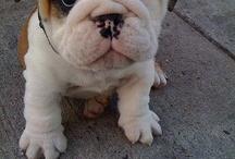 Too stinkin' cute! / by Ashley Anischko