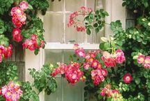 fiori e giardini
