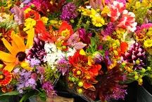 Wedding Flowers / by Bethan Johnston