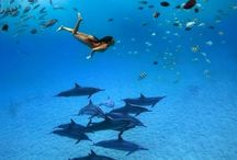 Dolphin and Reef Adventure Snorkel