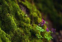 Moss & Grass ♥