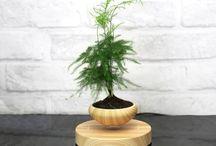Bonsai bay (Air Bonsai) - Cây cảnh phong thủy chơi tết cực chất / Bonsai bay – Một ý tưởng đến từ Nhật Bản  Bạn đang cận cảnh xem những hình ảnh về quá trình sản xuất chậu gốm cho các sản phẩm Bonsai bay. Các công đoạn cơ bản được thực hiện bằng những bàn tay khéo léo của các nghệ nhân Nhật Bản – Thật kỳ diệu! Để cập nhật những mẫu Bonsai mới nhất, mời bạn truy cập website: http://sawa.vn/bonsai-bay/