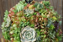 Succulents / by Lona Northener