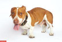 World's Ugliest Dog 2013 / by Kira Stackhouse