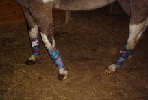 DIY horse supplies / by Gabrielle Smith