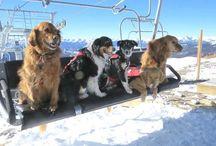 Ski alpin + AT / Alpine skiing + AT