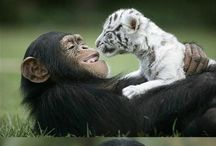 Lovely Life ll Animal Lovers