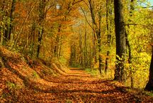 Autumn / by Peg Schoening