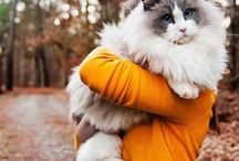 Meow (Ragdoll) Cats / some cute pics of ragdoll (and other sweet) cats <3