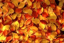about fallen leaves