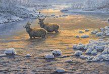 The Wildlife Art of Martin Ridley