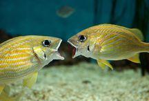 Fish Fish Fish Fishy Fish