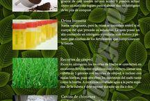 fertilizantes caseros