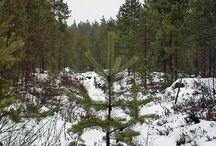Metsänhoito