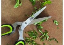 Gardening | Herbd | Vegetables |