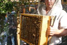 -Abelhas, bees