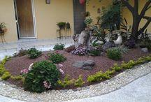 Mi jardin 4