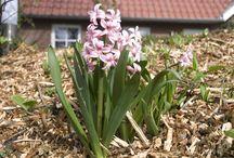 Frühling von unten 04 | 14 / www.kirchhoff.net