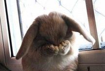 Милахи кролики