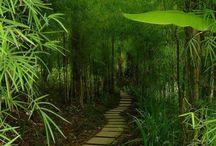 Zimovzdorné bambusy