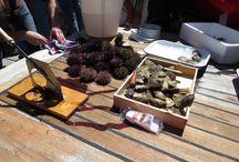 Gastronomía a bordo / Degustación de productos del mar a bordo de una goleta.