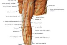 Anatomy of the body