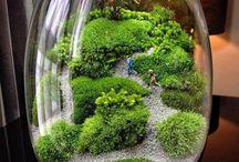 terrarium scene