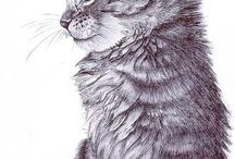 Cat Drawings / Paintings