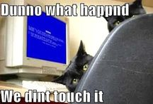 Cats.... / Because everybody knows that is what the internet is for... and let's face it, they deserve their own board